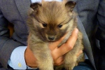 alex-miranda-kgun-morning-blend-host-pomeranians-holding